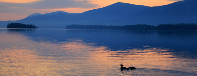 detail-common-loon-sunset-blue-mountain-lake