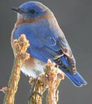 Winter Birding Festival Special
