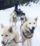 Guided Dog Sled Tour Package