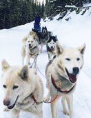 Guided Sled Dog Tours