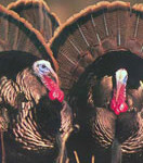 Turkey Day Thanksgiving Weekend Special