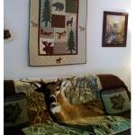 unit-1-living-room.jpg